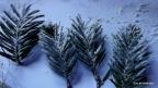 5. Utiliza los polvos de talco a modo de nieve. La laca fijadora puede ayudar a que los árboles se impregnen mejor.
