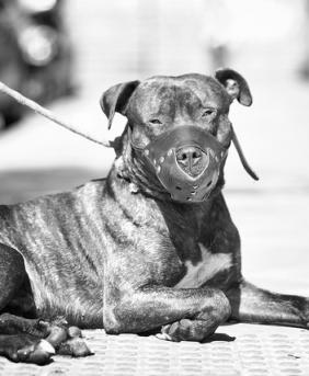 Perro con bozal. Fotografía de Jon Díez Supat. Algunos derechos reservados