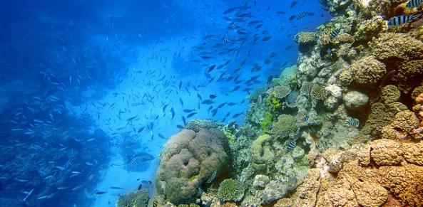 Arrecife de coral  Foto por  Algunos derechos reservados